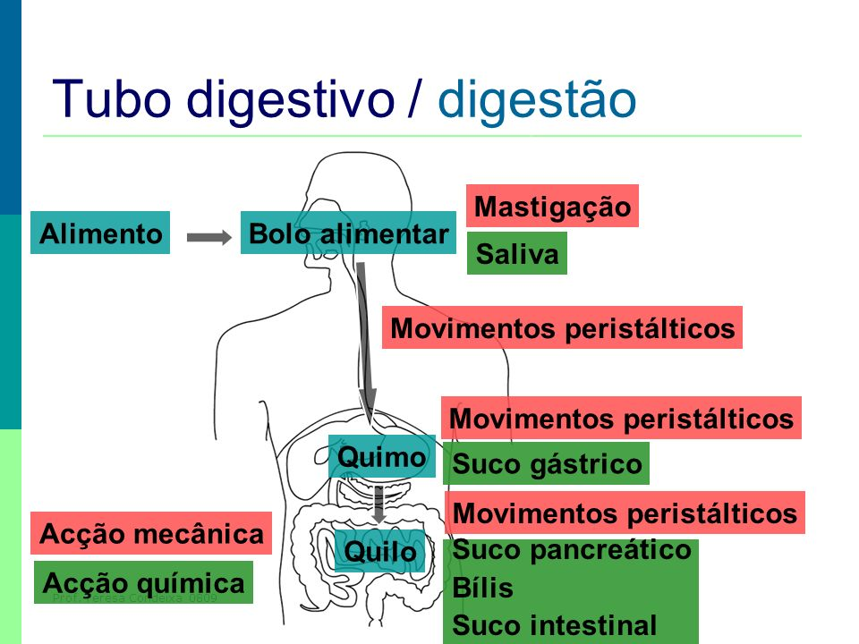 Tubo digestivo / digestão