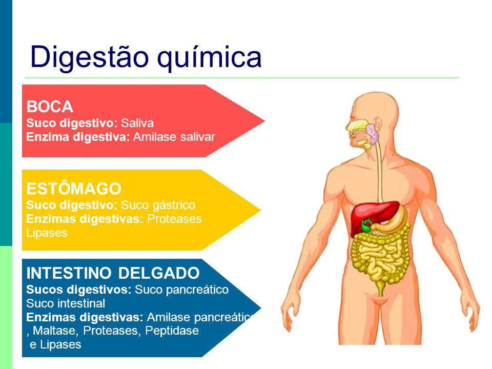 Digestão química BOCA ESTÔMAGO INTESTINO DELGADO