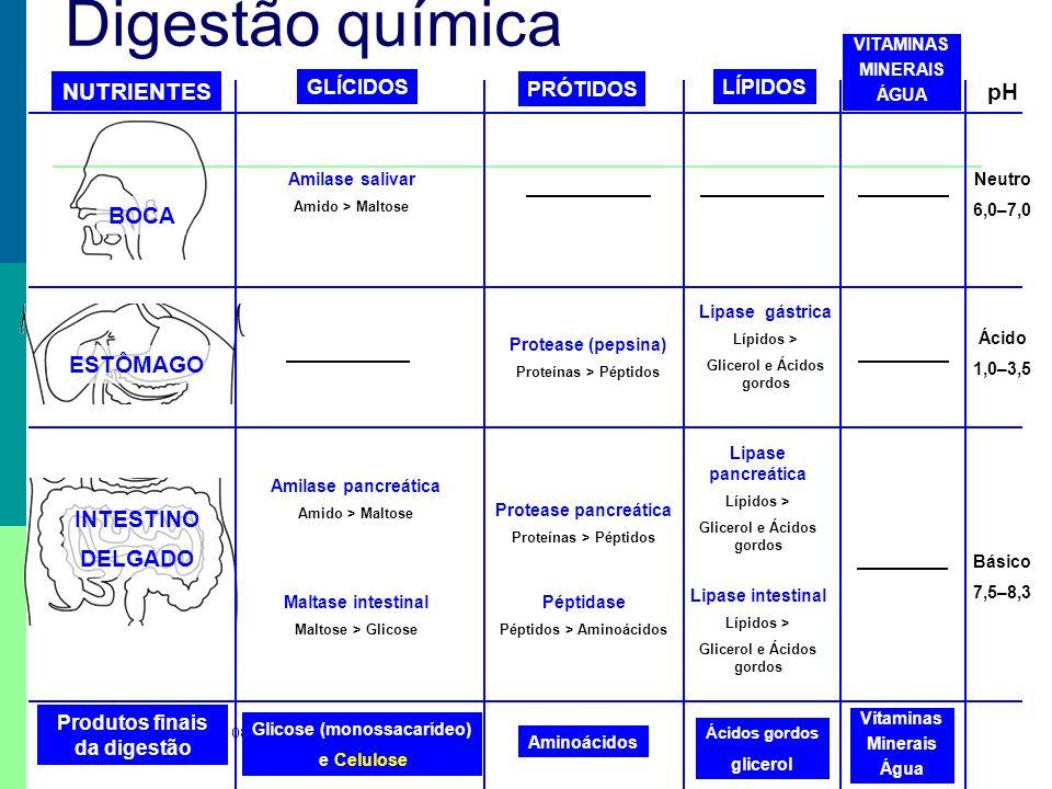 Digestão química NUTRIENTES pH BOCA ESTÔMAGO INTESTINO DELGADO
