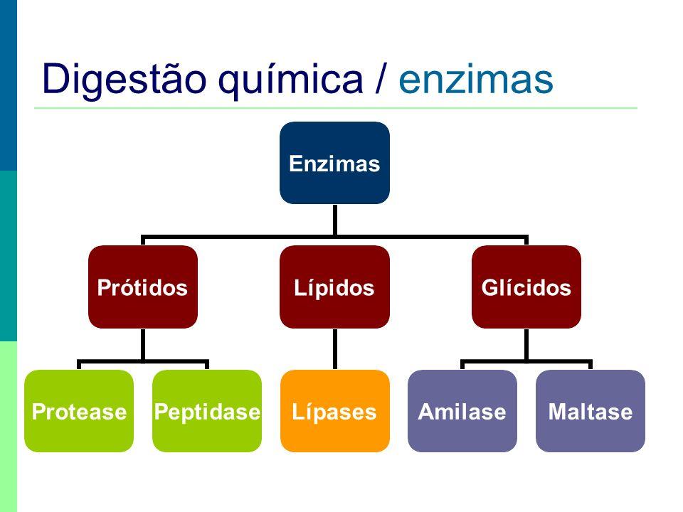 Digestão química / enzimas