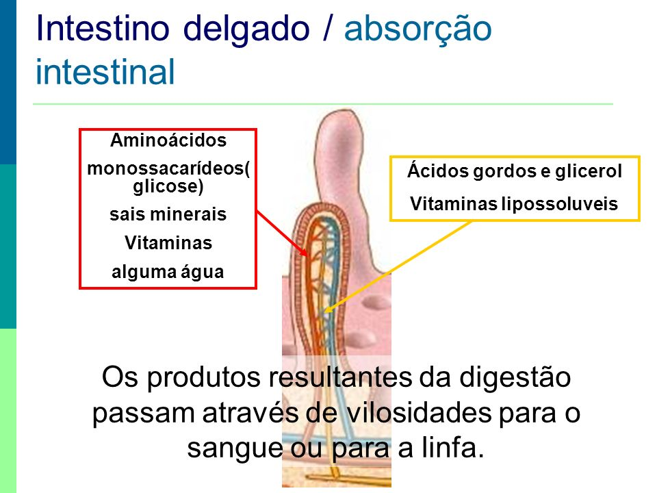 Intestino delgado / absorção intestinal