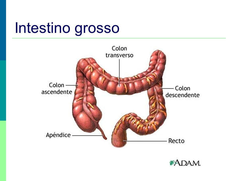 Intestino grosso