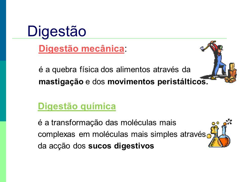 Digestão Digestão mecânica: