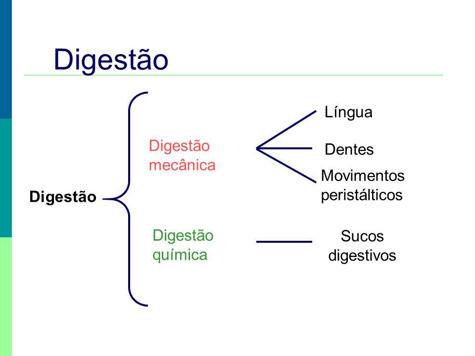Digestão Língua Digestão mecânica Dentes Movimentos peristálticos