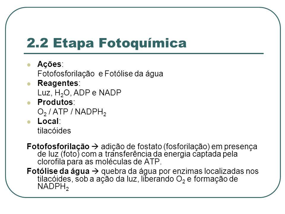 2.2 Etapa Fotoquímica Ações: Fotofosforilação e Fotólise da água