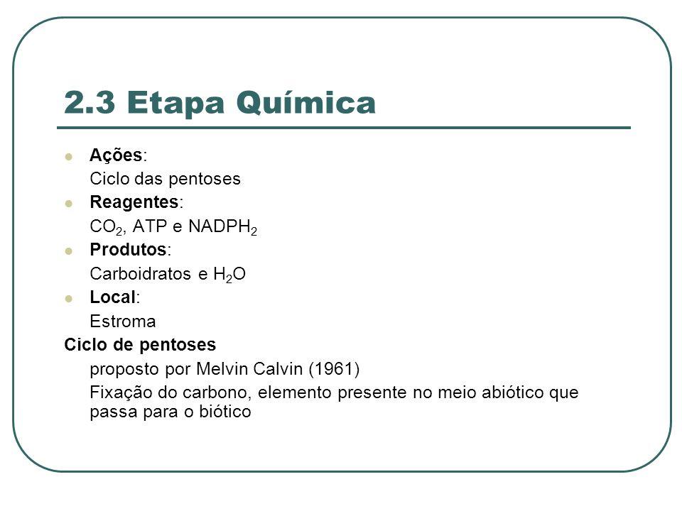 2.3 Etapa Química Ações: Ciclo das pentoses Reagentes: