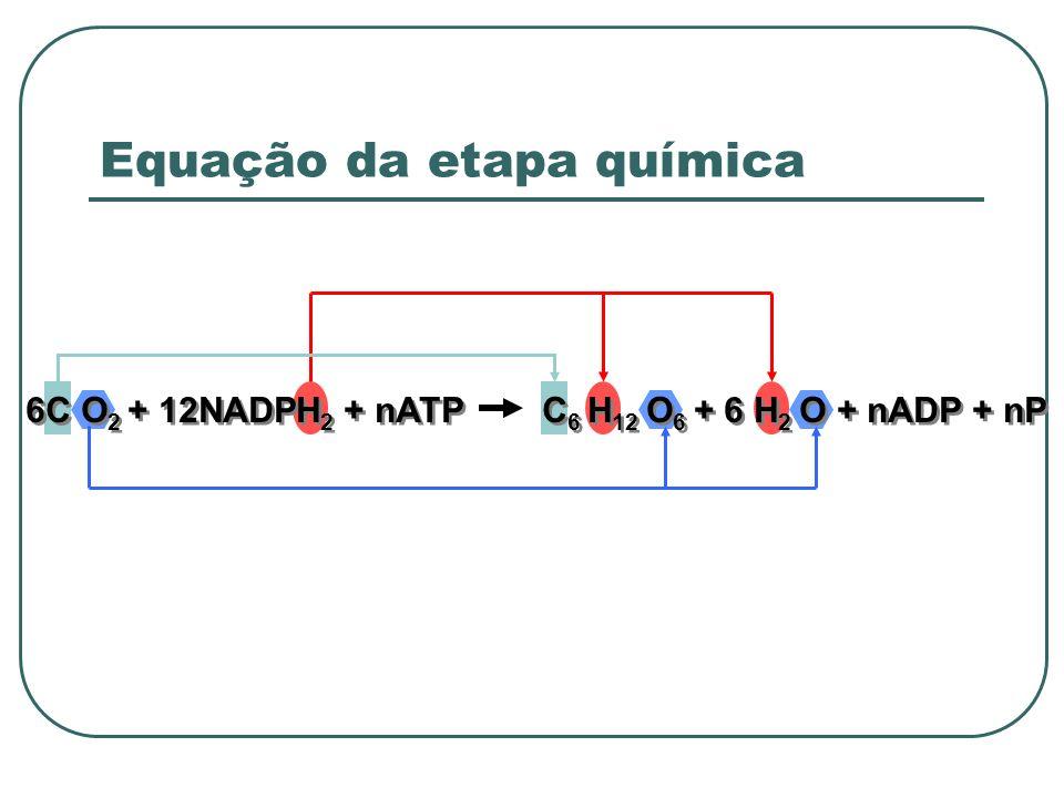 Equação da etapa química