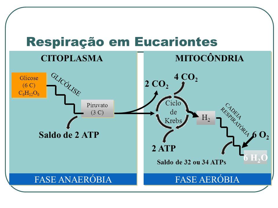 Respiração em Eucariontes