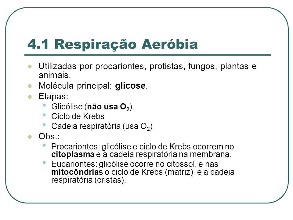 4.1 Respiração Aeróbia Utilizadas por procariontes, protistas, fungos, plantas e animais. Molécula principal: glicose.
