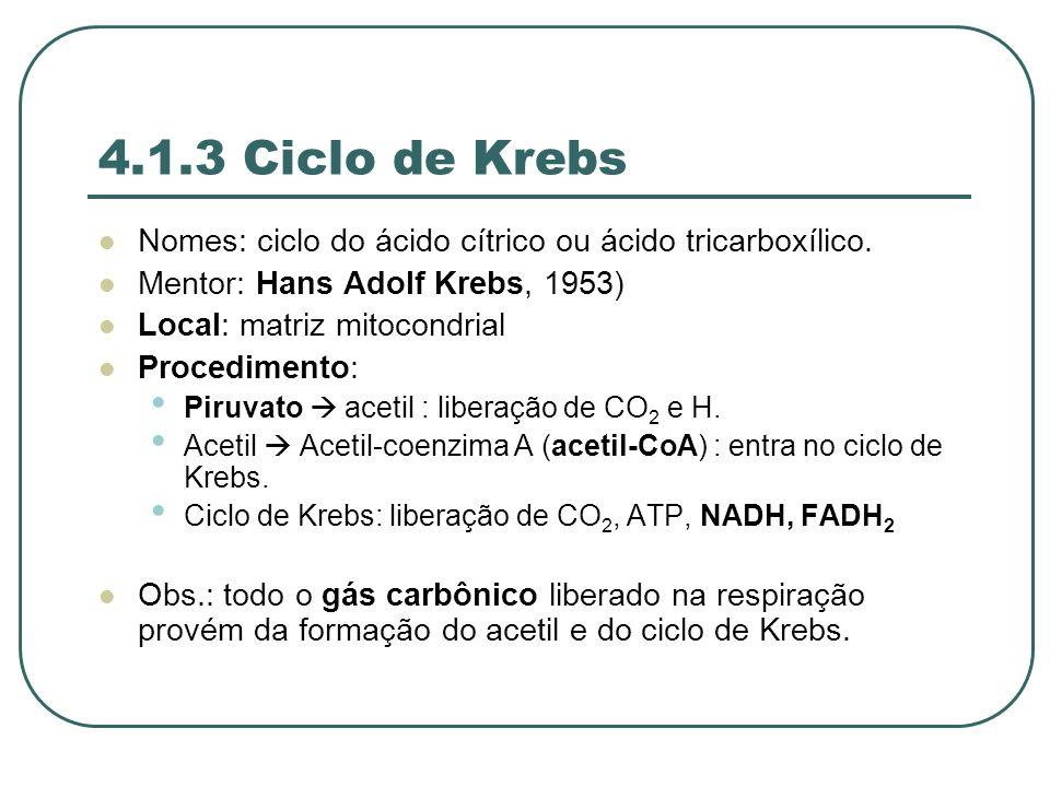 4.1.3 Ciclo de Krebs Nomes: ciclo do ácido cítrico ou ácido tricarboxílico. Mentor: Hans Adolf Krebs, 1953)