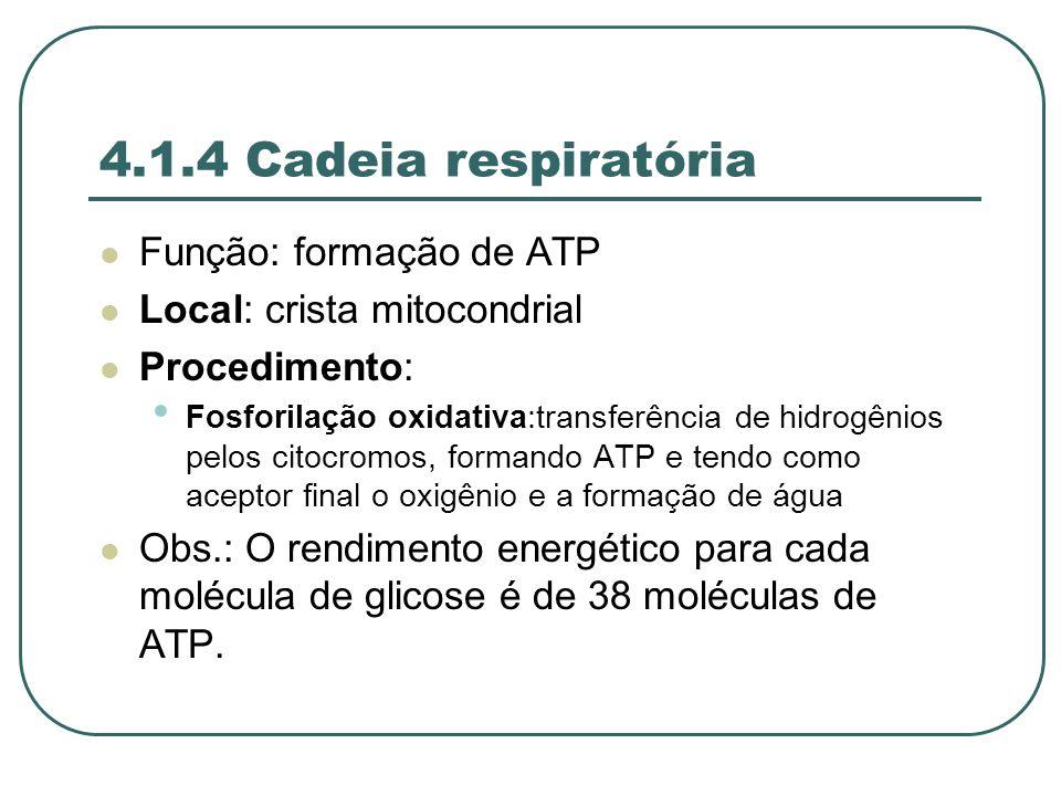 4.1.4 Cadeia respiratória Função: formação de ATP