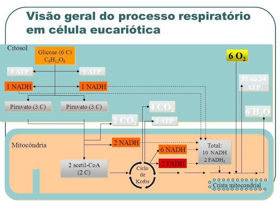 Visão geral do processo respiratório em célula eucariótica