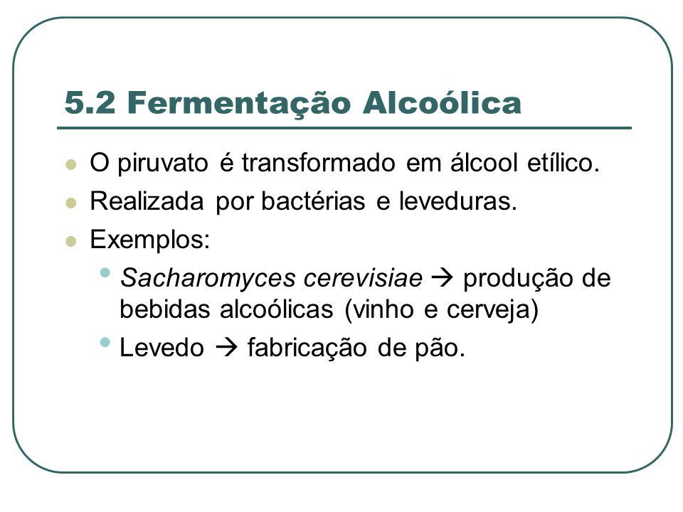 5.2 Fermentação Alcoólica