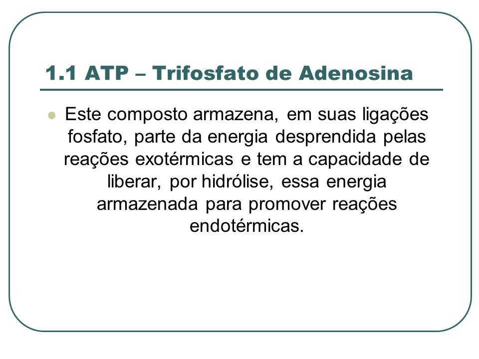 1.1 ATP – Trifosfato de Adenosina