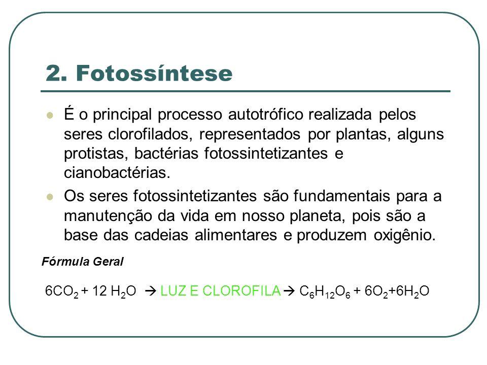 2. Fotossíntese