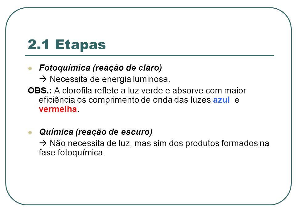 2.1 Etapas Fotoquímica (reação de claro)
