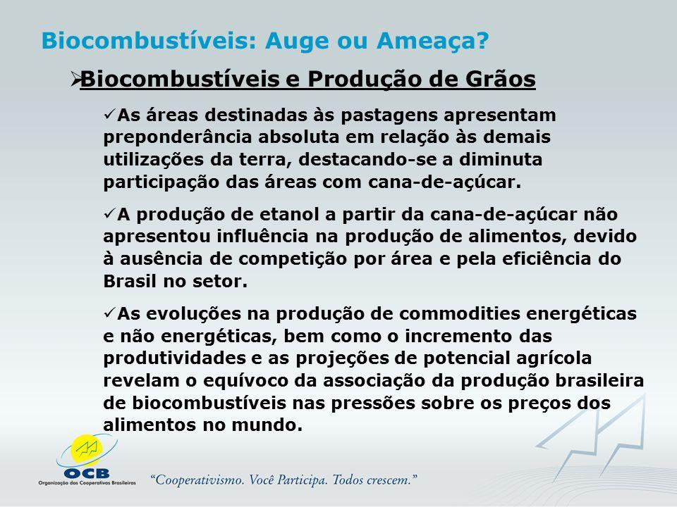 Biocombustíveis: Auge ou Ameaça