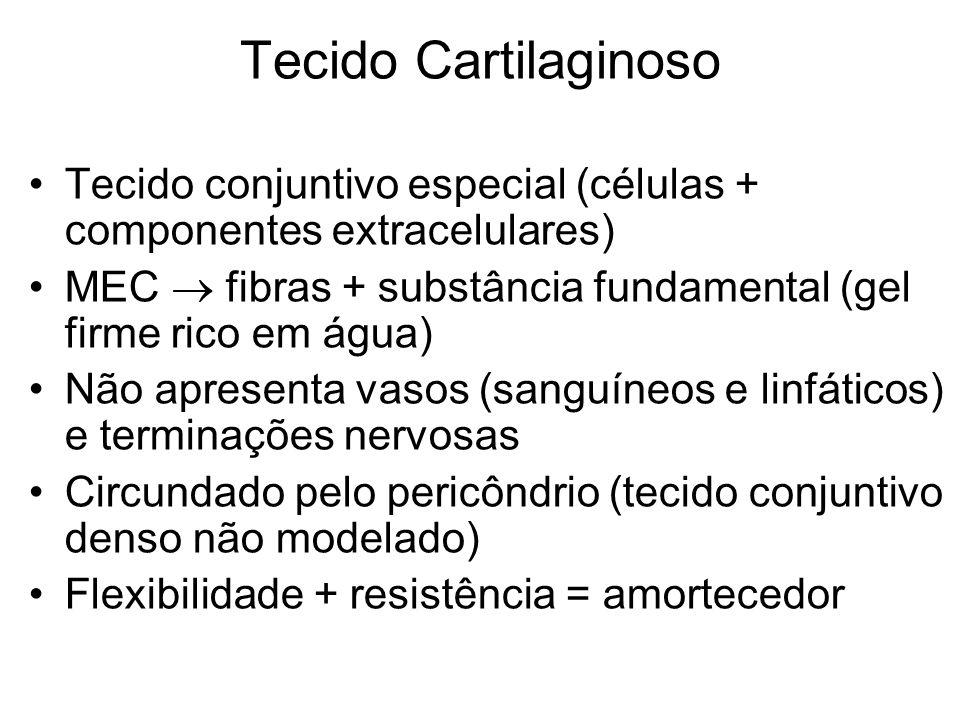 Tecido CartilaginosoTecido conjuntivo especial (células + componentes extracelulares) MEC  fibras + substância fundamental (gel firme rico em água)