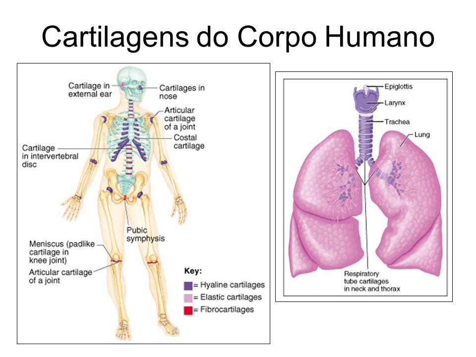 Cartilagens do Corpo Humano