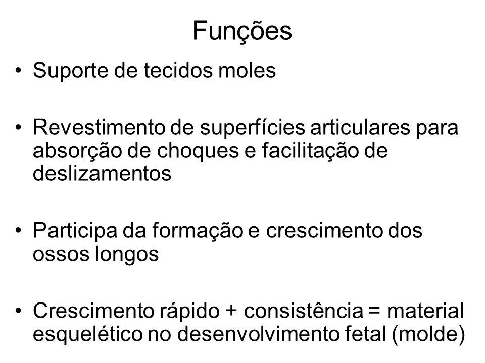 Funções Suporte de tecidos moles