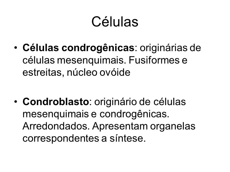 CélulasCélulas condrogênicas: originárias de células mesenquimais. Fusiformes e estreitas, núcleo ovóide.