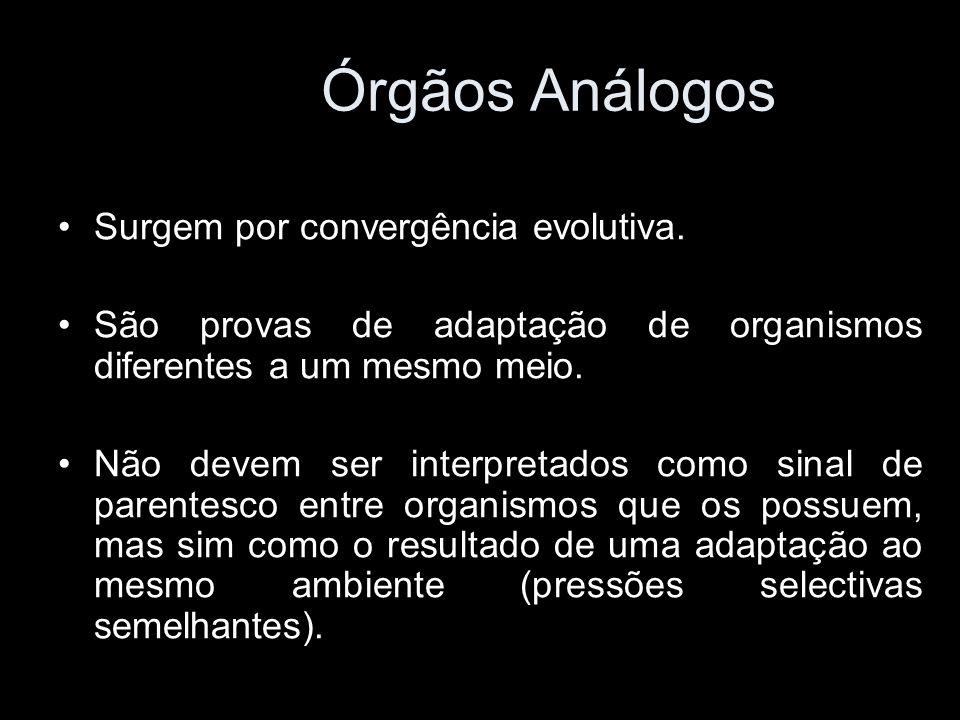 Órgãos Análogos Surgem por convergência evolutiva.