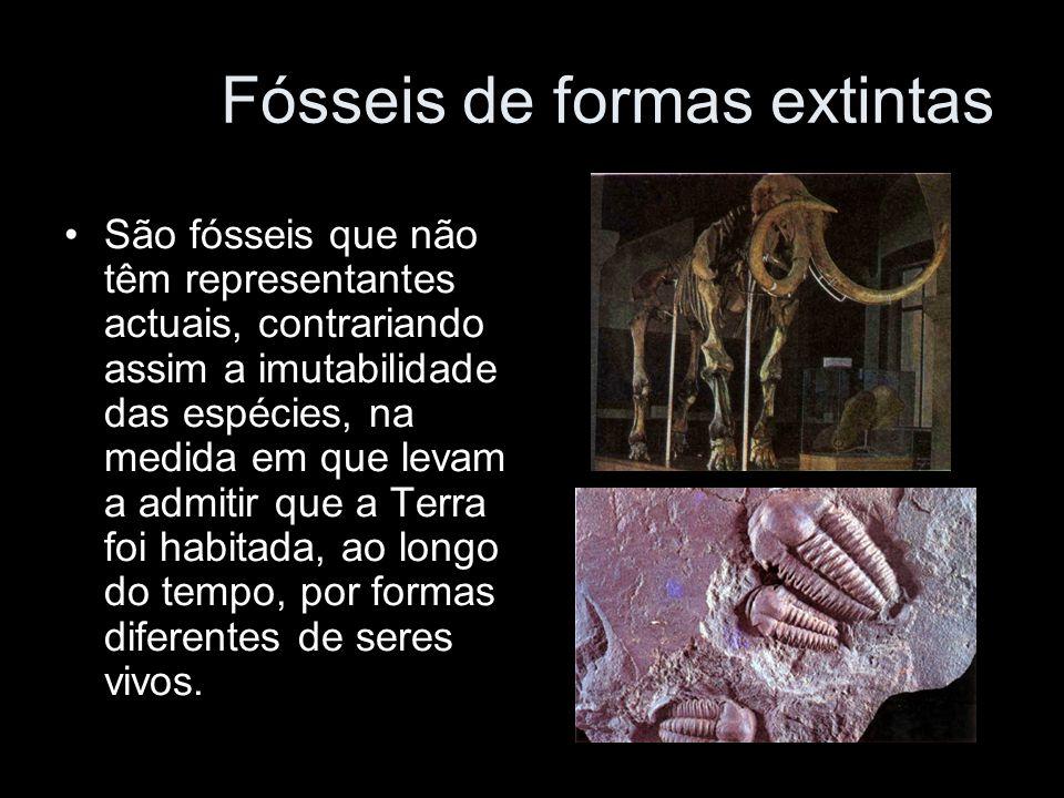 Fósseis de formas extintas