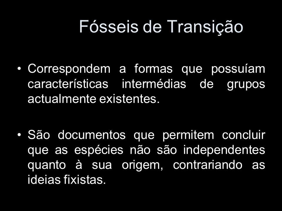 Fósseis de Transição Correspondem a formas que possuíam características intermédias de grupos actualmente existentes.