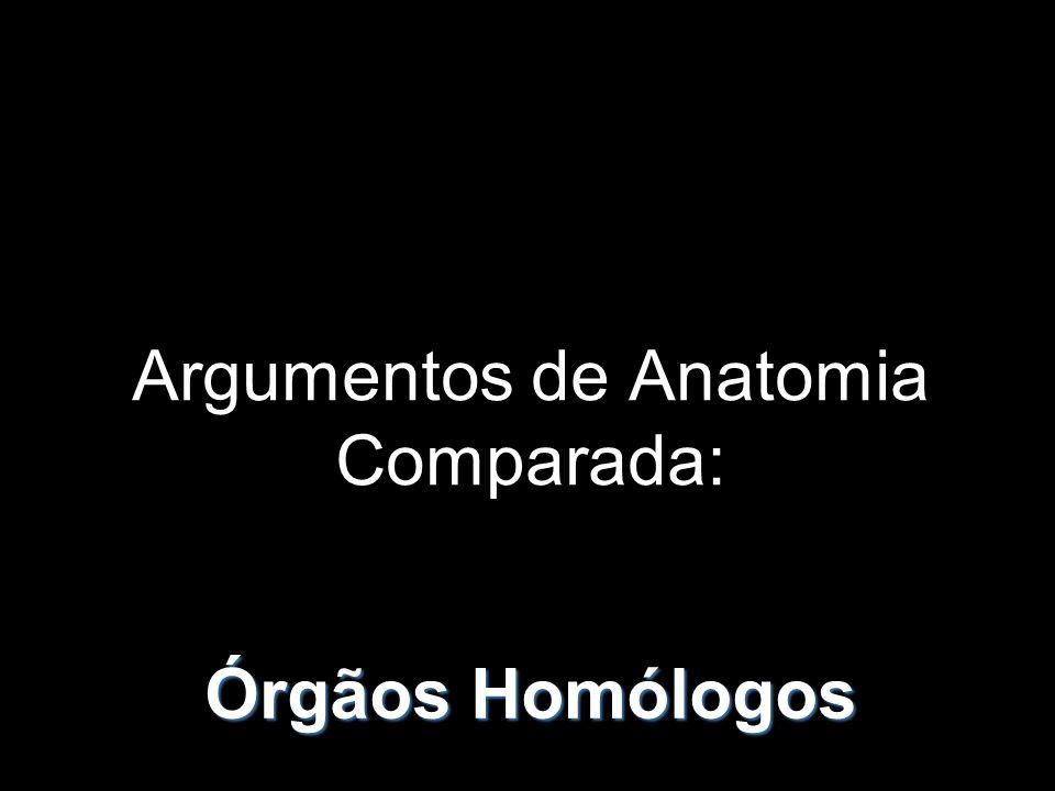 Argumentos de Anatomia Comparada: