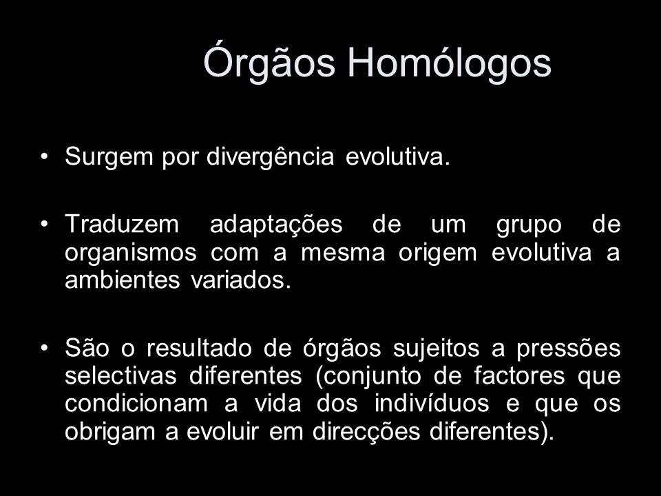 Órgãos Homólogos Surgem por divergência evolutiva.