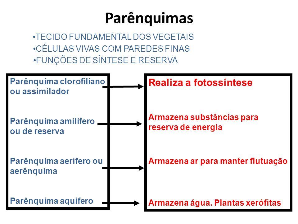 Parênquimas Realiza a fotossíntese TECIDO FUNDAMENTAL DOS VEGETAIS