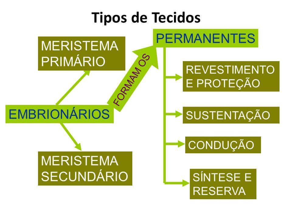 Tipos de Tecidos PERMANENTES MERISTEMA PRIMÁRIO EMBRIONÁRIOS