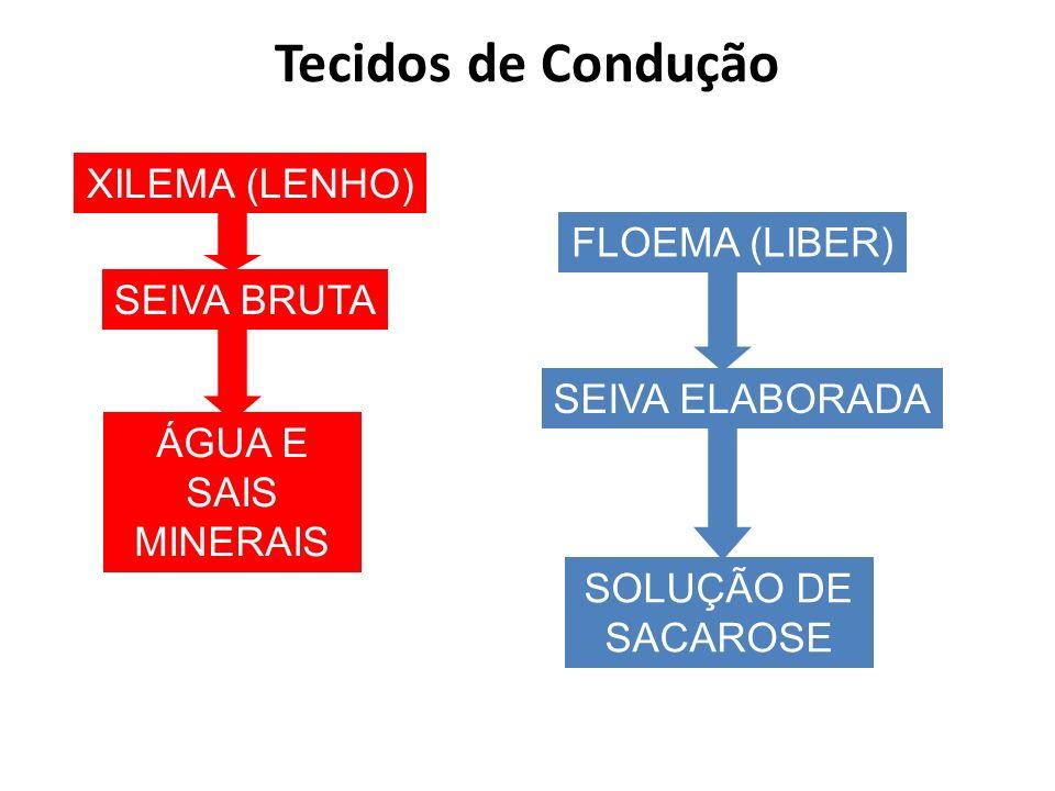Tecidos de Condução XILEMA (LENHO) FLOEMA (LIBER) SEIVA BRUTA