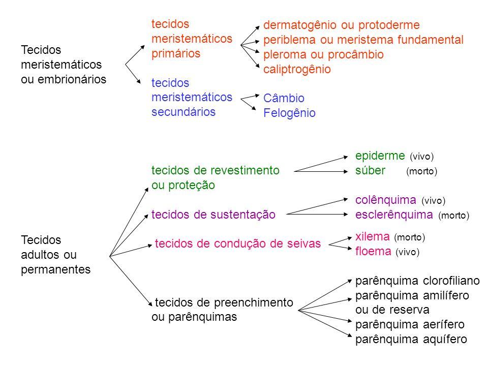 Tecidosmeristemáticos. ou embrionários. adultos ou. permanentes. tecidos. meristemáticos. primários.