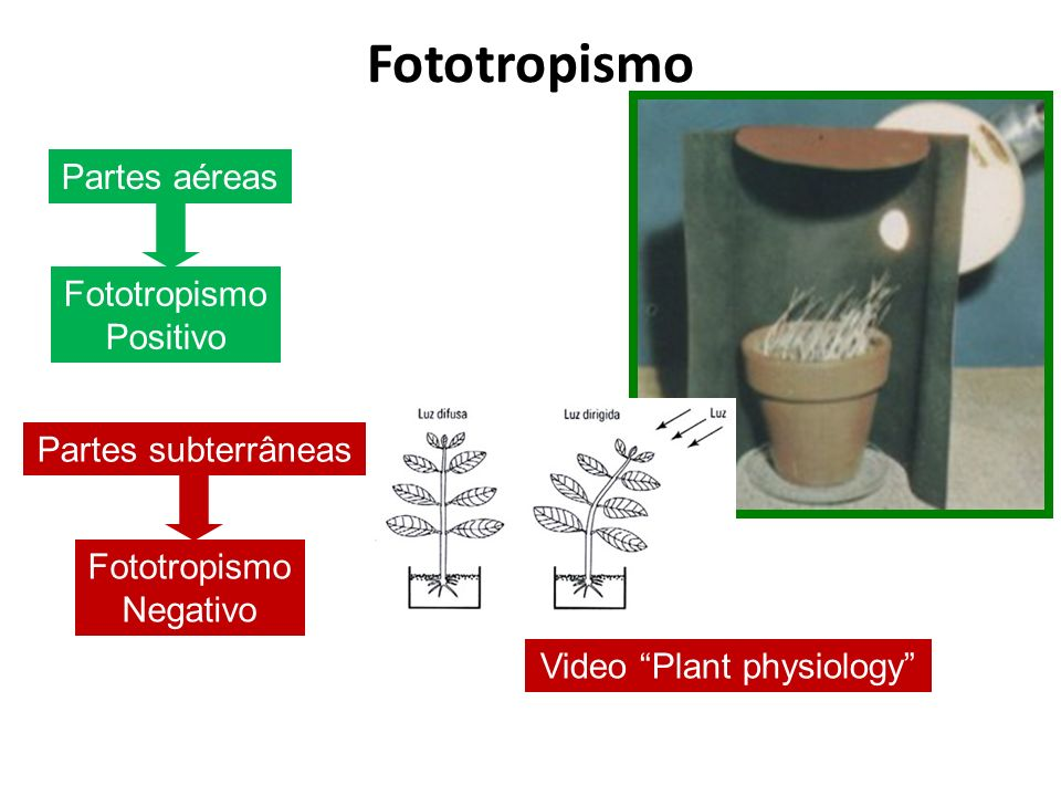 Video Plant physiology