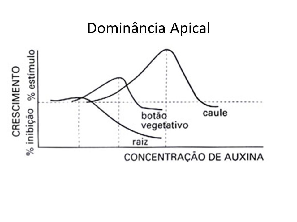 Dominância Apical