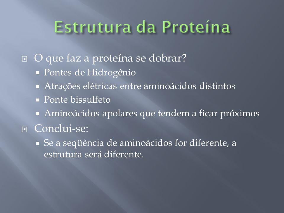 Estrutura da Proteína O que faz a proteína se dobrar Conclui-se: