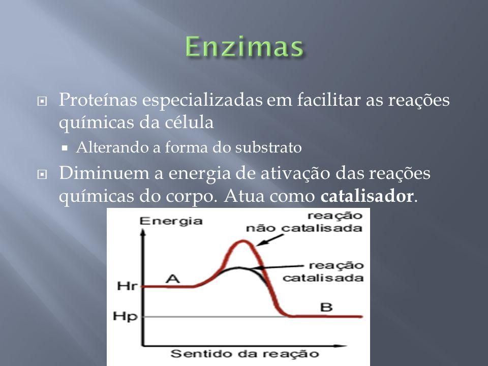Enzimas Proteínas especializadas em facilitar as reações químicas da célula. Alterando a forma do substrato.