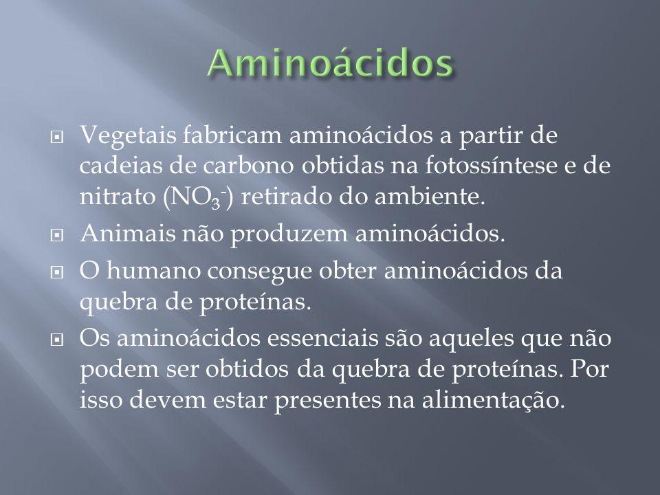 Aminoácidos Vegetais fabricam aminoácidos a partir de cadeias de carbono obtidas na fotossíntese e de nitrato (NO3-) retirado do ambiente.