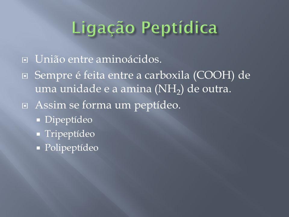 Ligação Peptídica União entre aminoácidos.