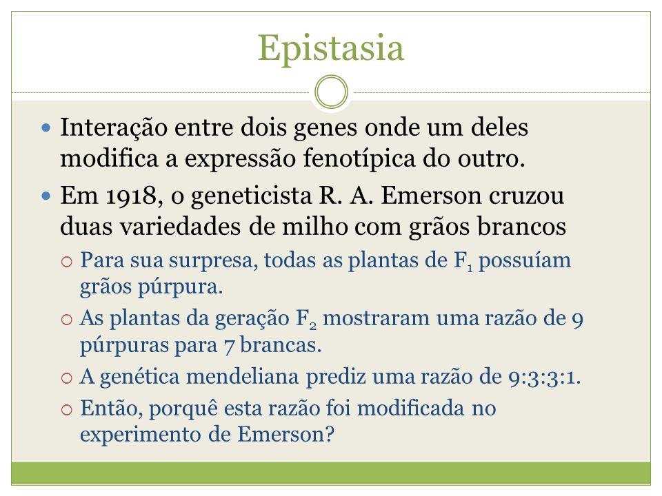 EpistasiaInteração entre dois genes onde um deles modifica a expressão fenotípica do outro.