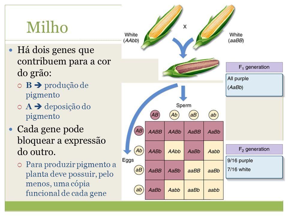 Milho Há dois genes que contribuem para a cor do grão: