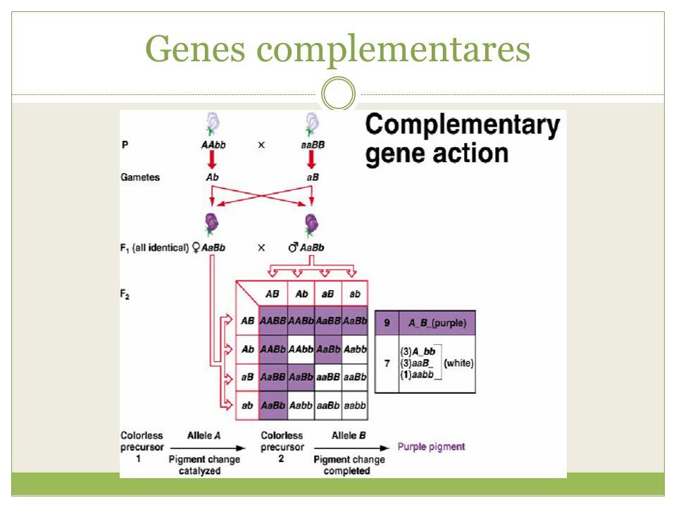 Genes complementares