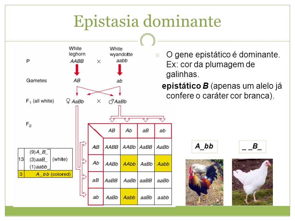 Epistasia dominanteO gene epistático é dominante. Ex: cor da plumagem de galinhas. epistático B (apenas um alelo já confere o caráter cor branca).
