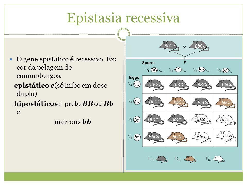 Epistasia recessivaBC. bC. Bc. bc. 1⁄4. BBCc. BbCc. BBcc. Bbcc. bbcc. bbCc. BbCC. bbCC. BBCC. 9⁄16.