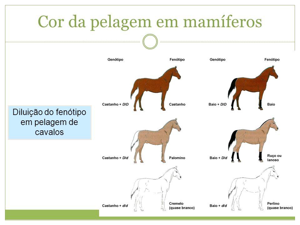Cor da pelagem em mamíferos