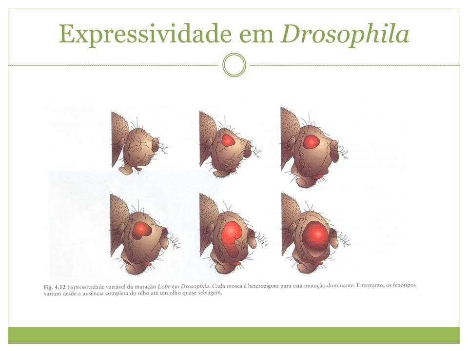 Expressividade em Drosophila