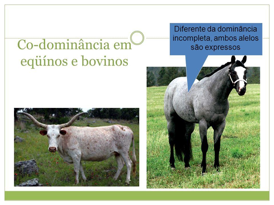 Co-dominância em eqüínos e bovinos