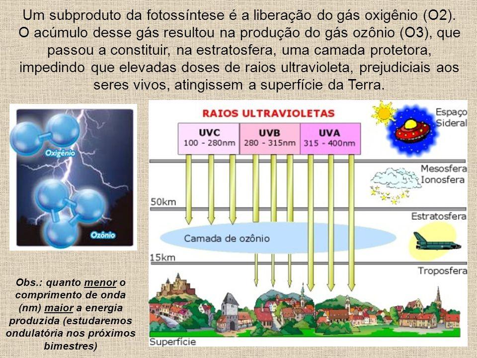 Um subproduto da fotossíntese é a liberação do gás oxigênio (O2)