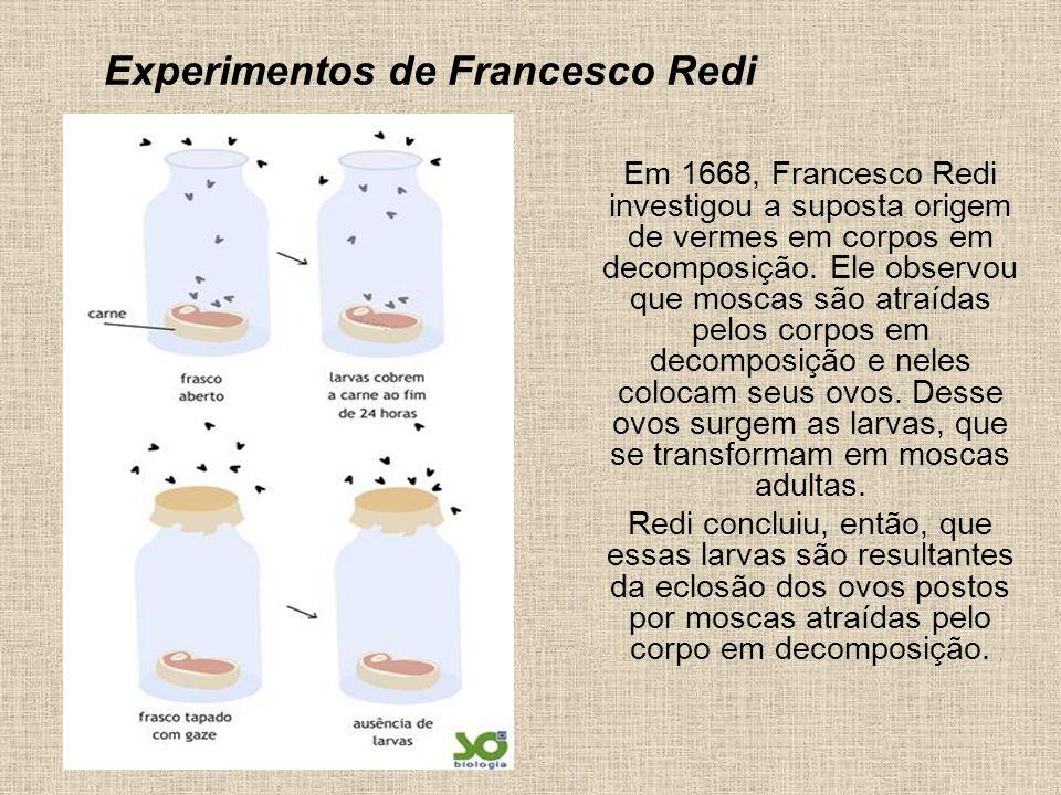 Experimentos de Francesco Redi
